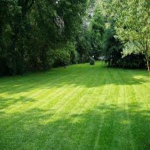 local_lawn_care_steinbach_300x300