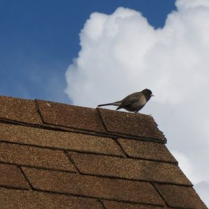 roofing-picture